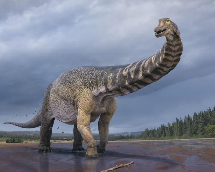 Újabb dinoszauruszfajt azonosítottak Ausztráliában