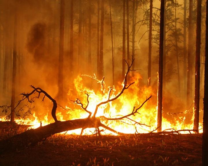 Nébih: országos tűzgyújtási tilalom lépett életbe