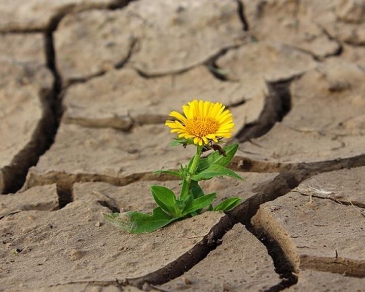 Hőség - Az agrárkamara kezdeményezte a tartósan vízhiányos időszak kihirdetését