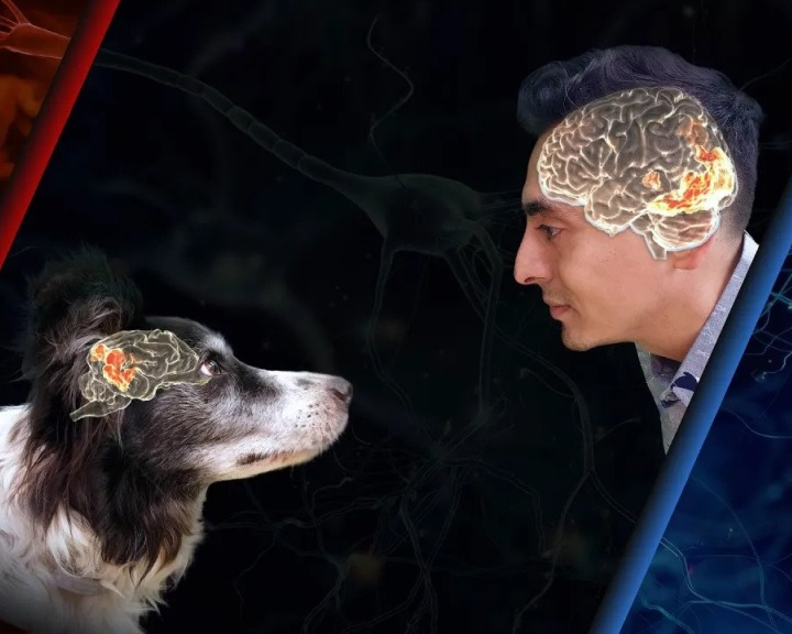 Az ELTE etológusai szerint nemcsak az emberek lehetnek tehetségesek, hanem a kutyák is