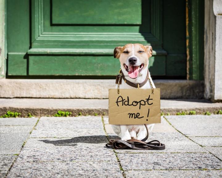 Augusztus 16-a a hontalan állatok világnapja.