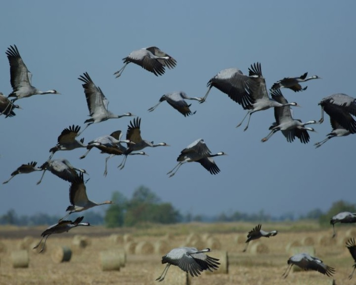 AM: a Natura 2000 területeket népszerűsíti a Hortobágyi Nemzeti Park fejlesztése