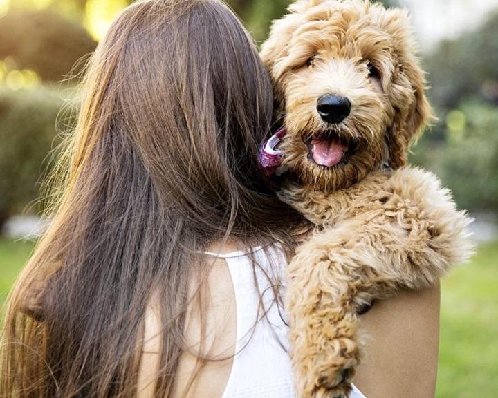 Etológusok: úgy kötődik a kutya a gazdájához, mint gyerek az anyjához