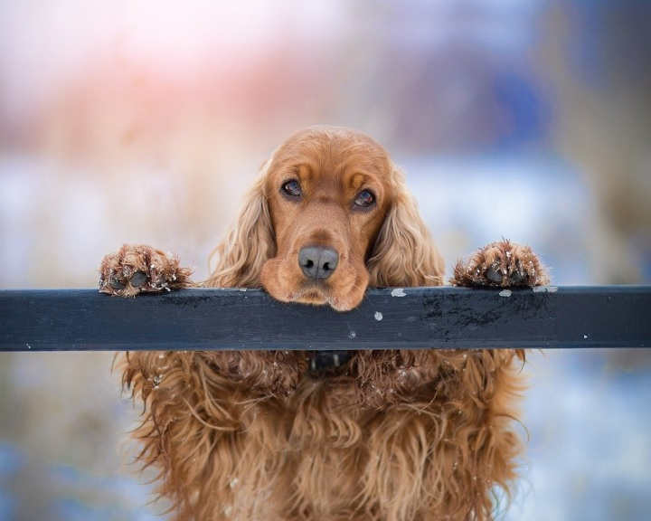 Ingyen gazdijogsit minden kutyatulajdonosnak
