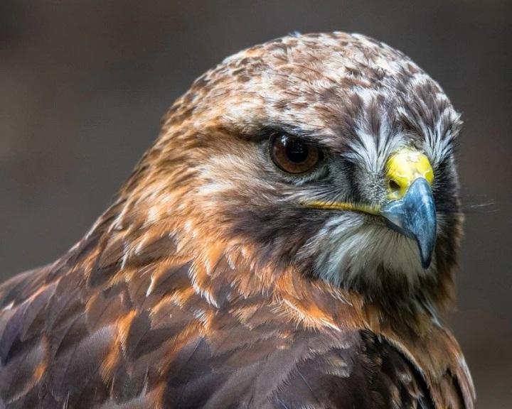 Tizenhat év alatt 1600 védett madarat pusztítottak el orvvadászok