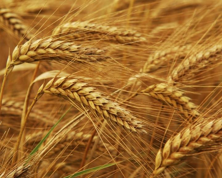 Indul a pályázat: 12 milliót is kaphatnak a fiatal gazdák