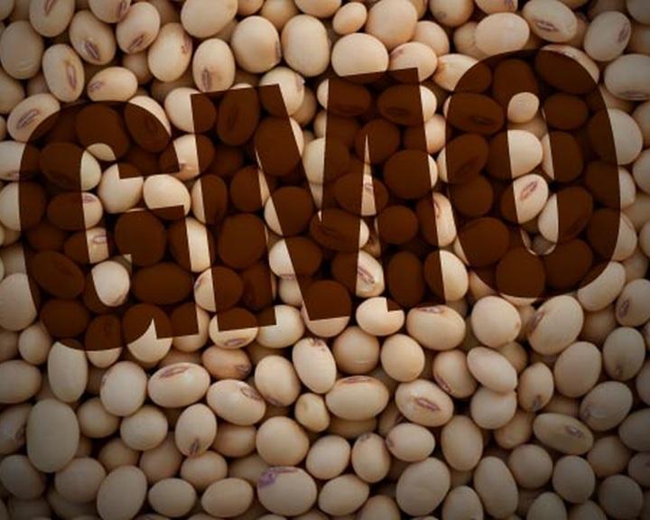 Rést nyitnának az uniós GMO-záron