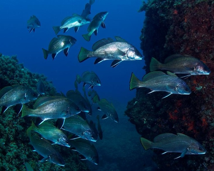 Megfeleződött a tengeri élővilág az elmúlt negyvenöt évben