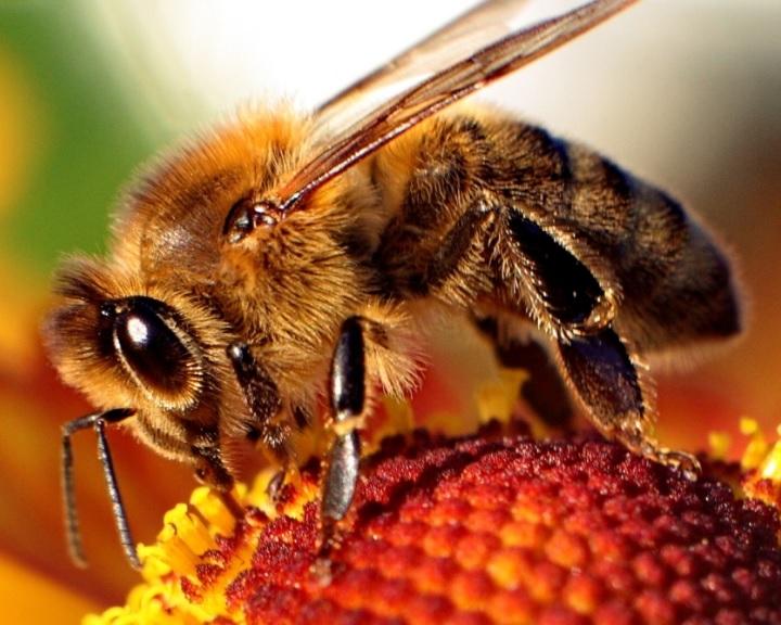 Az emberiség miatt pusztulnak a méhek