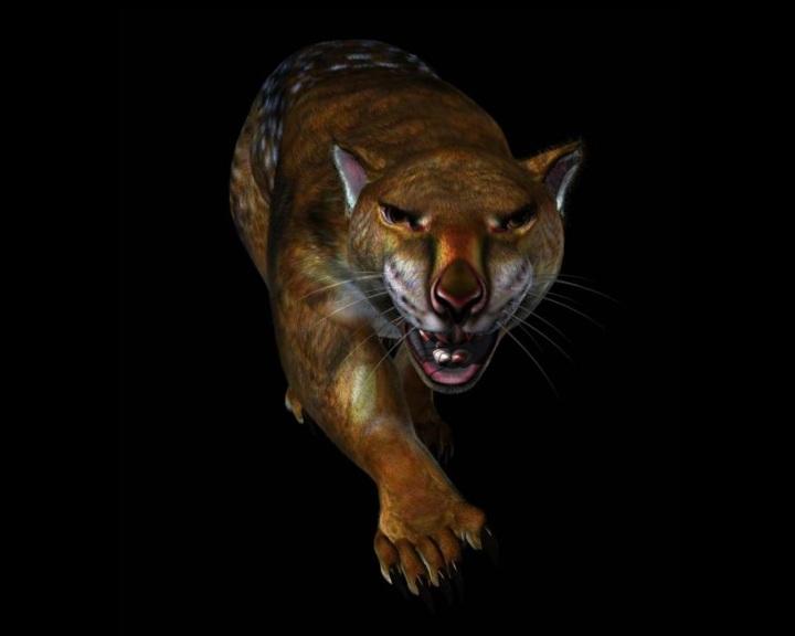 Az ausztrál erszényes oroszlán félelmetes csúcsragadozó volt