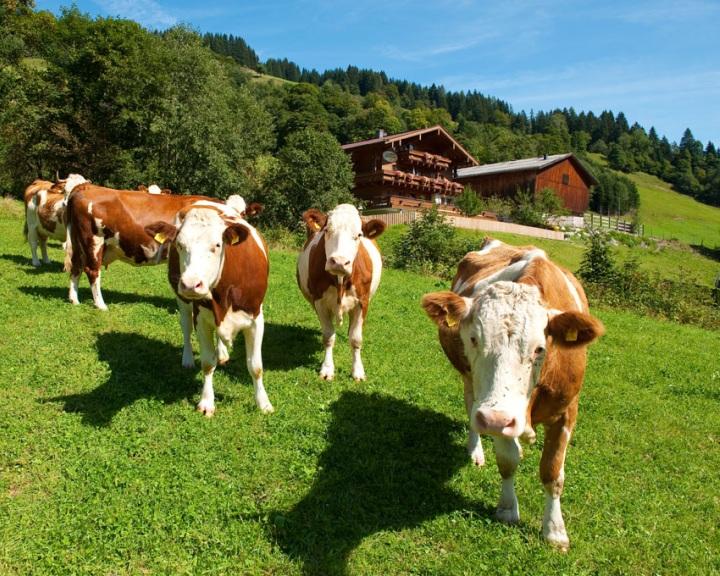 Az állattartás az üvegházhatású gázkibocsátás 14 százalékáért felelős