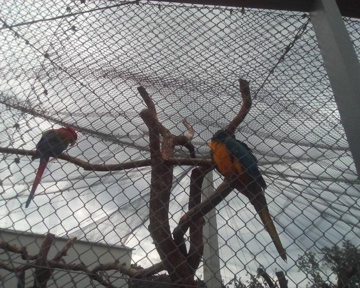 Örökbefogadói falat adtak át a pécsi állatkertben