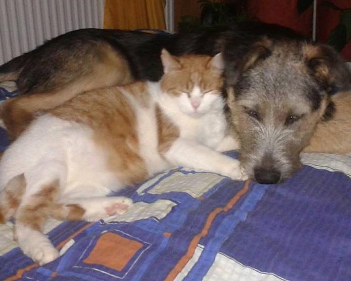Farsangi jótékonysági bál az állatok javára