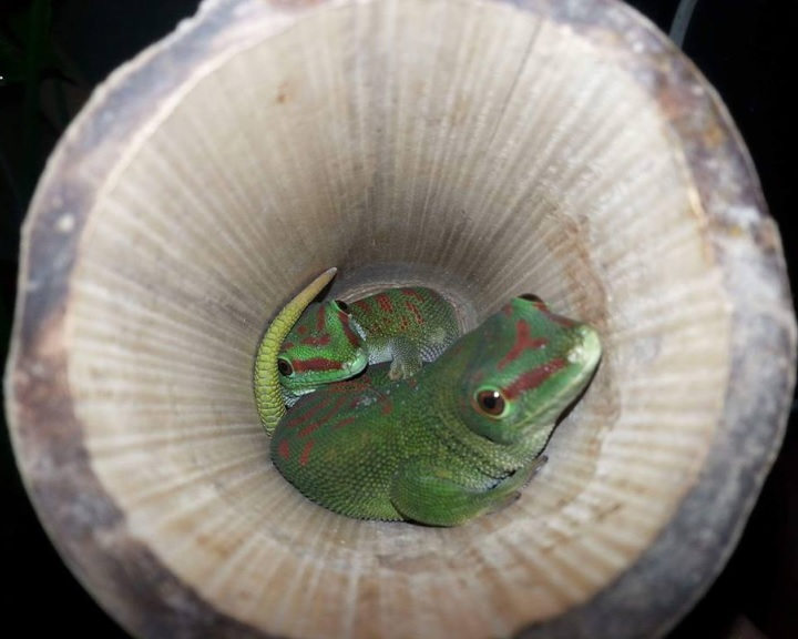 A Víz világnapja a komlói Mini Zoo-ban