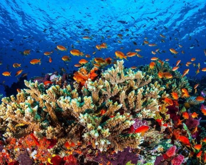 Ötvenhat milliárd ausztrál dollárt ér a Nagy-korallzátony