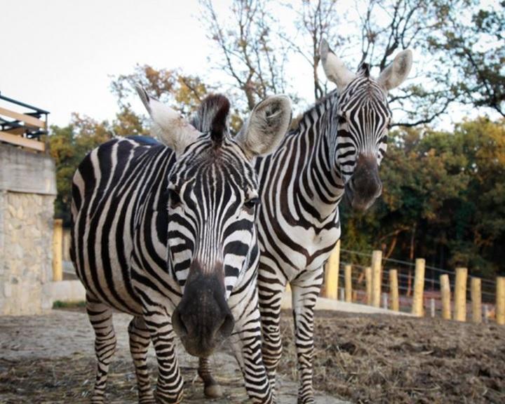Negyedmillió látogatót fogadott a felújított Pécsi Állatkert