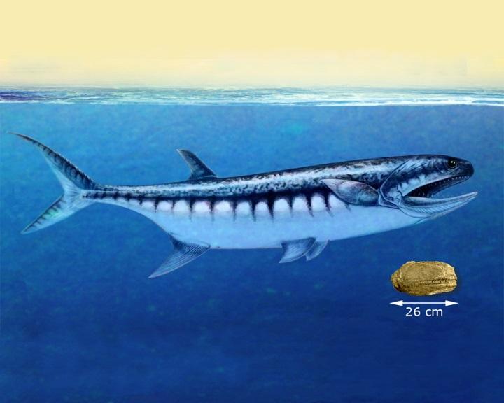 Ősi cápaszerű ragadozó halfajt fedeztek fel egy nevadai fosszíliában