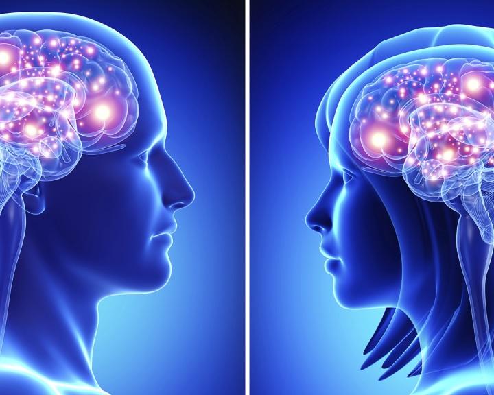 A nők agya jobban jutalmazza az önzetlen viselkedést, mint a férfiaké