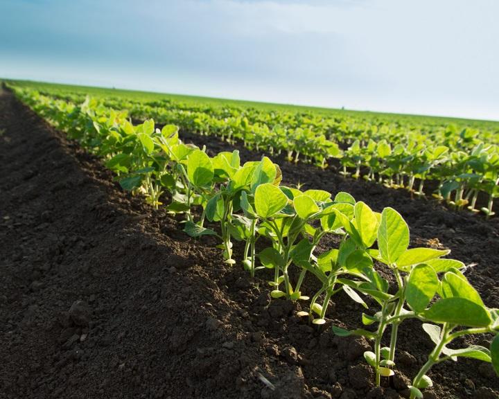 Az Európai Bizottság iránymutatást adott ki a termőföld értékesítéséről