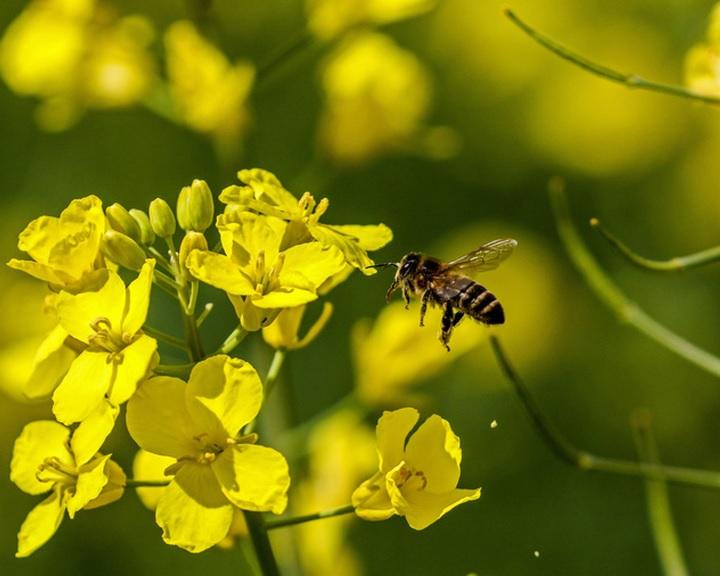 Méhek, kaptárak, méz - rajzpályázat gyerekeknek