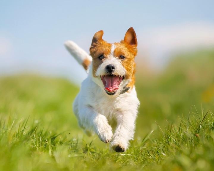 Megnyílik a kutyafuttató Komló-Kökönyösben