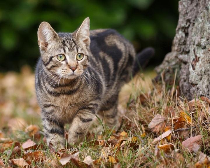 Több, macskáknak szánt élősködőirtó is elbukott a Nébih tesztjén