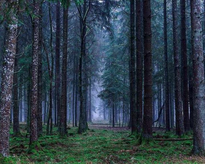 Európa erdeinek több mint fele eltűnt az elmúlt hatezer évben