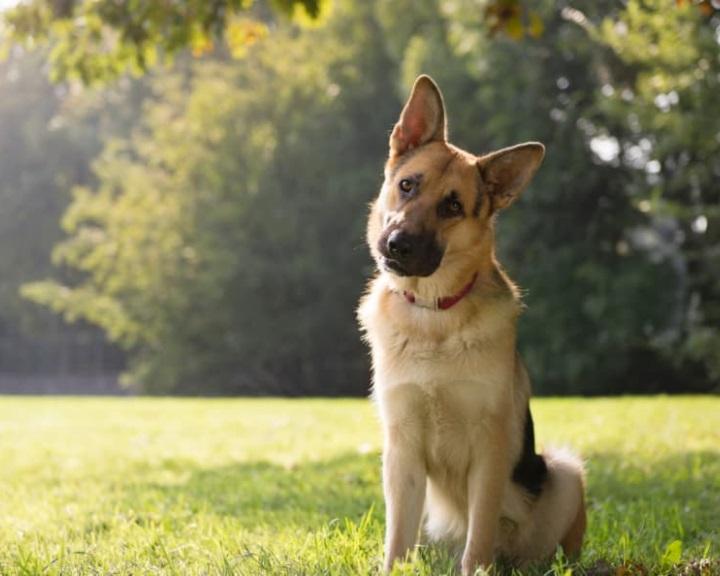 ELTE: a kutyákról kellene a robotok reakcióit mintázni