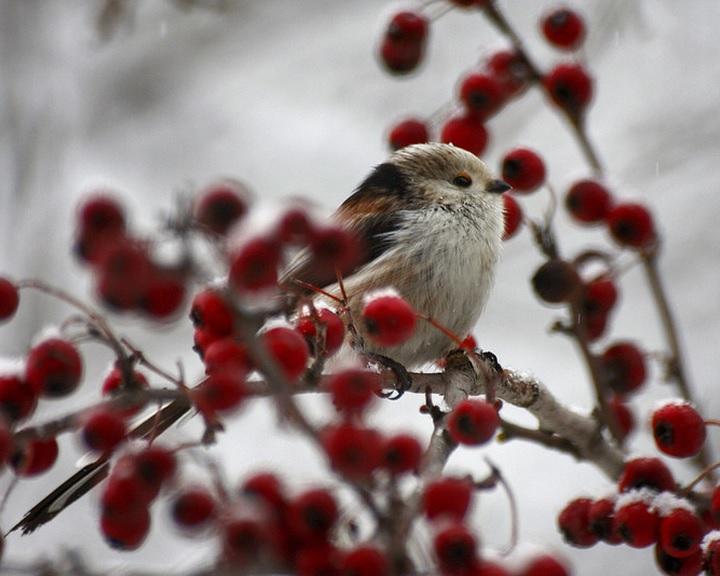 A madarak és fák napja alkalmából ismét versenyt hirdet az MME