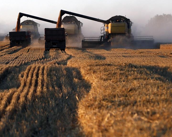 Oroszország csúcsra járatja a búzaexportot