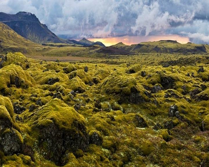 Az eddig véltnél 100 millió évvel korábban hódították meg a szárazföldet a növények