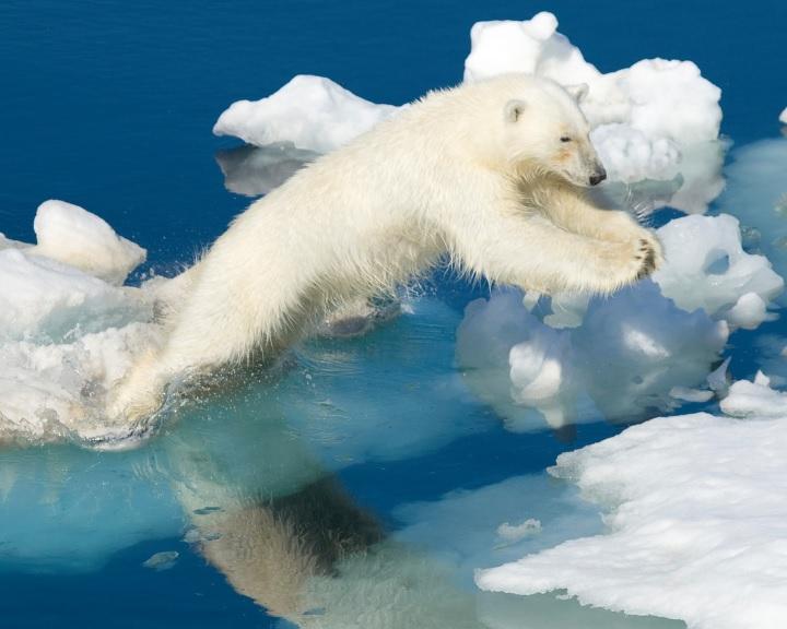 Egyre gyakoribbak és hosszabbak az északi-sarkvidéki hőhullámok