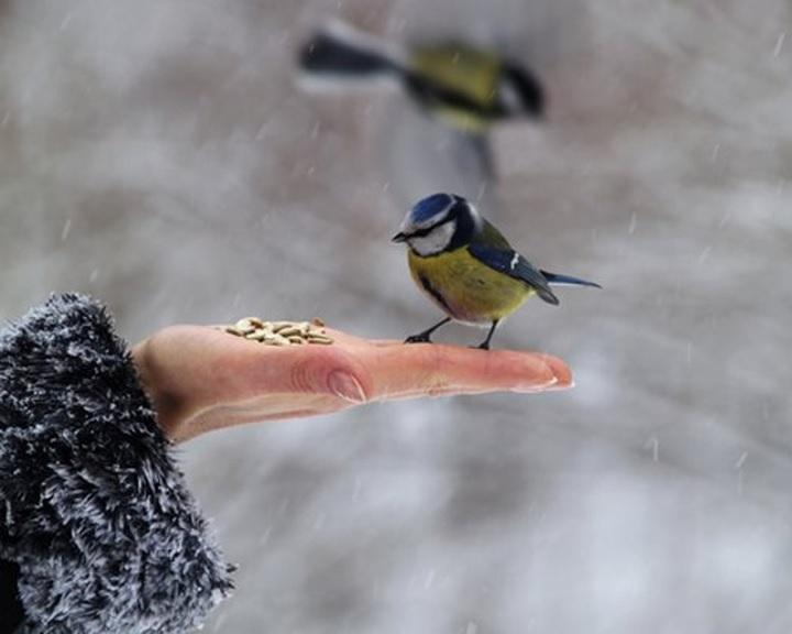Havazás - Hóesésben életmentő a madáretetés