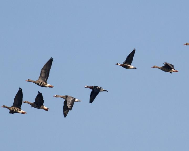 Indul a Tavaszi madárles program