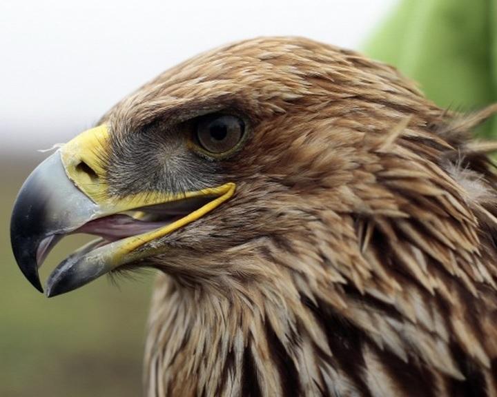 Magyar természetvédelmi projektre is lehet szavazni a Natura 2000 Díj döntőjében