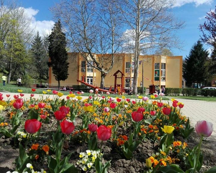 Kezdődik a virágosítás - virágvásár kedvezményesen