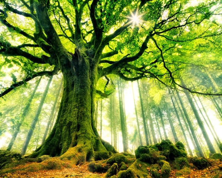 Madarak és fák napja - védjük a madarakat és élőhelyüket!