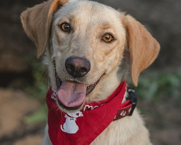 Mikrochip-leolvasókkal segíti az elkóborolt kutyák hazajutását a Mol