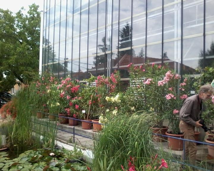 Pécsi Tudományegyetem Botanikus Kert - ingyenes családi programok