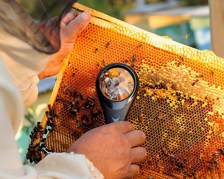 Méhzárlatot rendeltek el Pécsett és kilenc szomszédos településen