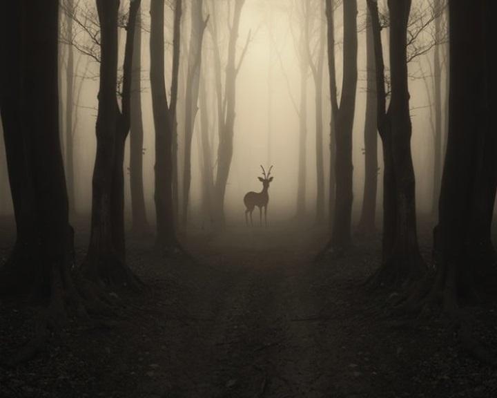 Az állatok egyre inkább éjszakai műszakra váltanak