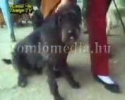A Kutyaoltásról