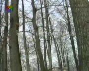 Az erdészet téli munkái... (Szőnyi János, Vass István)