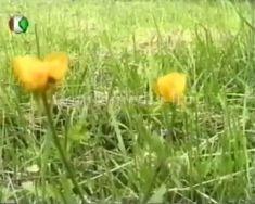 Tavaszi etűd