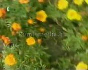 Aki a virágot szereti...