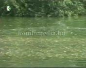 Előzzük meg a vízibalaseteket - A Vöröskereszt filmje
