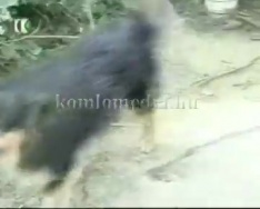 A Sallai utcában a kutyamenhelyre panaszkodnak az ott lakók (dr. Somogyi Károly)