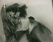 Megtekinthető a múzeumban Molnár István Géza időszeletek című fotó kiállítása