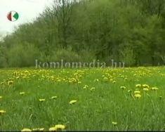 Cserma-alja természetvédelmi terület 1983-tól