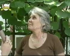 Botanikai különlegesség a városunkban (Zsiga Jánosné)